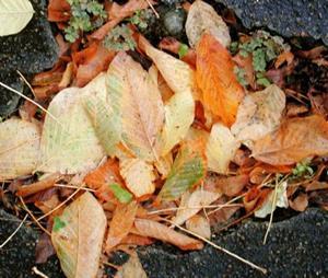 Detail Image for art Autumn Gutter 2