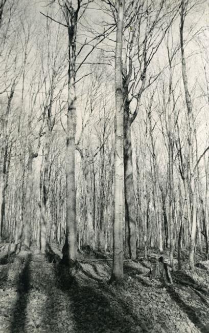 Art: The Forest  by Artist Virginia Ann Zuelsdorf