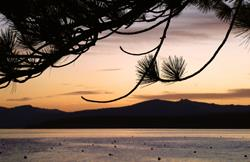 Art: Lake Tahoe sunset with Ponderosa pine by Artist Muriel Areno