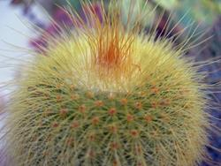 Art: Cactus Macro Photography SOLD by Artist Terri L West