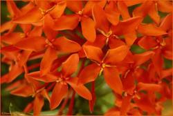 Art: Tropical Orange Flowers by Artist Lar Shackelford