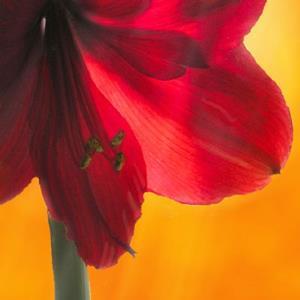 Detail Image for art Glory Transending