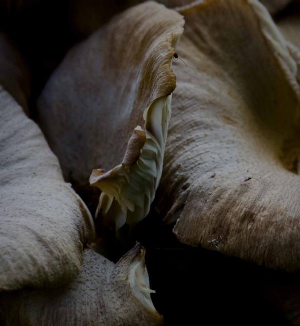 Art: Four Mushrooms, Two Flies by Artist Richard Holland