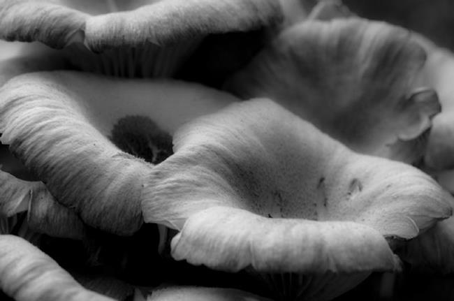 Art: Old Fashioned Mushrooms by Artist Richard Holland