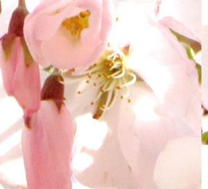 Detail Image for art Cherry Bee 3