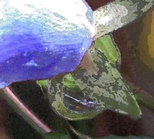 Detail Image for art Rose Blue