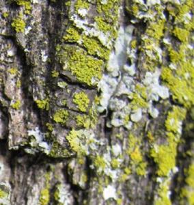 Detail Image for art Moss