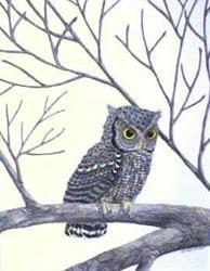 Art: Grey Screech Owl (SOLD) by Artist Jackie K. Hixon