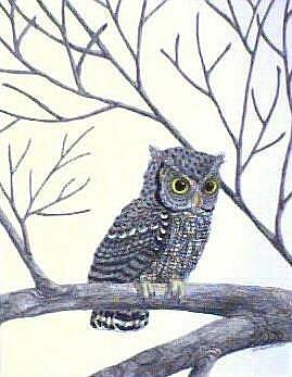 Art: Grey Screech Owl (SOLD) by Artist Jackie K. Hixon
