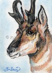 Art: The Sentry - Buck Pronghorn by Artist Kim Loberg