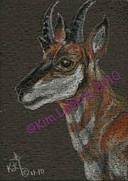 Art: Pronghorn Portrait SOLD by Artist Kim Loberg
