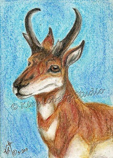 Art: Pronghorn Buck SOLD by Artist Kim Loberg