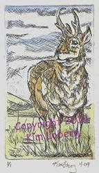 Art: Pronghorn 1/1 SOLD by Artist Kim Loberg