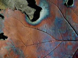 Detail Image for art RAKU leaf
