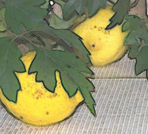 Detail Image for art LEMON CHICKEN