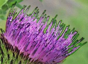 Detail Image for art PURPLE PRICKLES