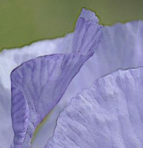 Detail Image for art SPRING FAVOURITE