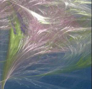 Detail Image for art WILD WINDS & WEBS