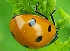 Detail Image for art Dear Ladybug