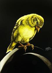 Art: American Gold Finch  (SOLD) by Artist Monique Morin Matson