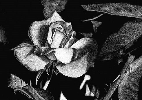 Art: Rose by Artist Sandra Willard