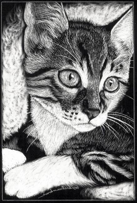 Art: Kitten by Artist Sandra Willard
