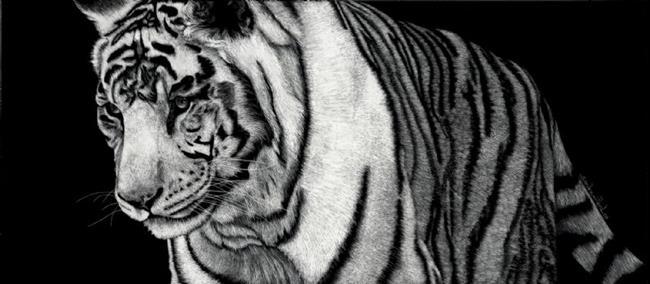 Art: White Tiger by Artist Sandra Willard