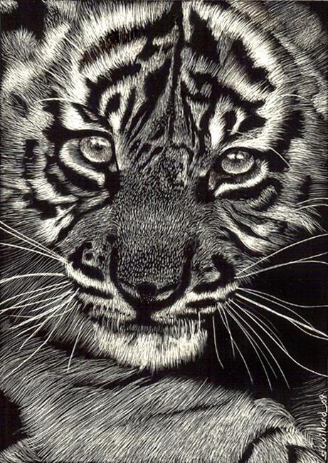Art: Baby Tiger by Artist Sandra Willard