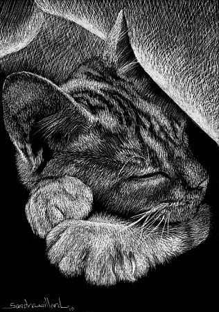 Art: Snug as a Bug by Artist Sandra Willard