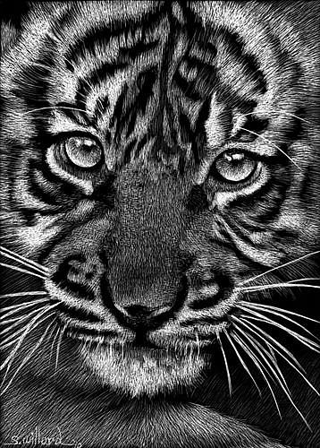 Art: Baby Tiger II by Artist Sandra Willard