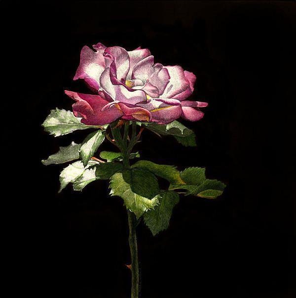 Art: Evening Rose by Artist Sandra Willard