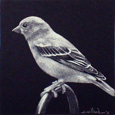 Art: Bird - Thumbnail by Artist Sandra Willard
