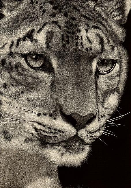 Art: Snow Leopard by Artist Sandra Willard