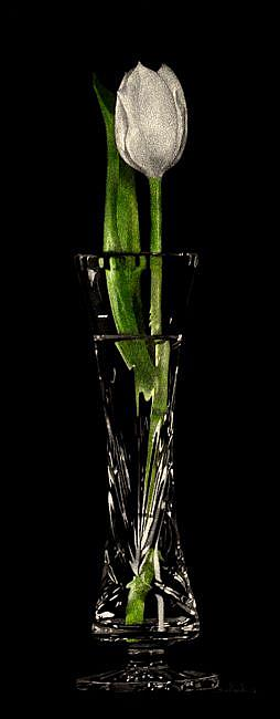 Art: Kindness - Tulip in Rogaska series by Artist Sandra Willard