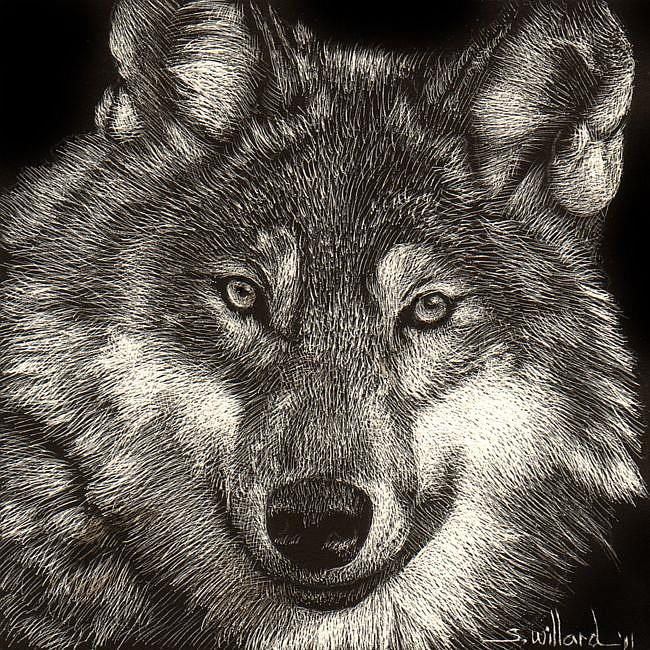 Art: Wolf by Artist Sandra Willard