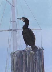 Art: Cormorant by Artist Carol Thompson