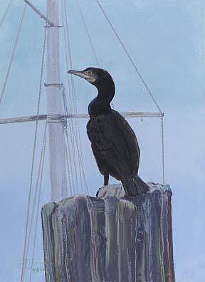 Art: Cormorant by Artist Carol Thompson