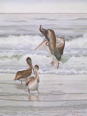 Art: Pelicans Three by Artist Carol Thompson