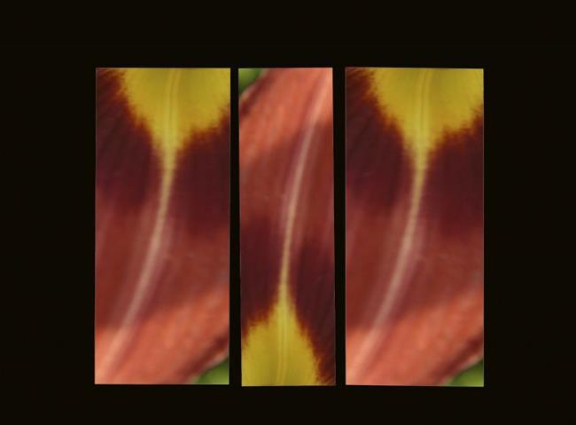 Art: Rip of Kevin's Tulips Triptych by Artist Carolyn Schiffhouer