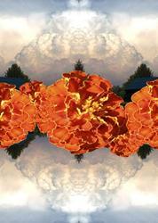 Art: marigold sky by Artist Carolyn Schiffhouer