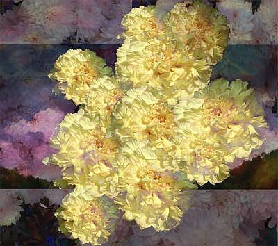 Art: Peony Pleasure by Artist Carolyn Schiffhouer