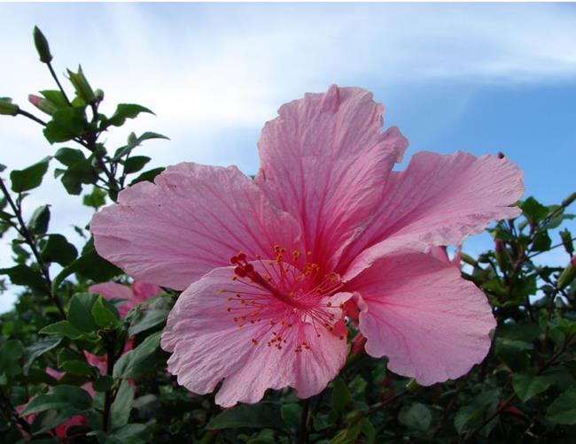 Art: Pretty in Pink by Artist Daniel Goodwin