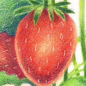 Detail Image for art Summer Treat