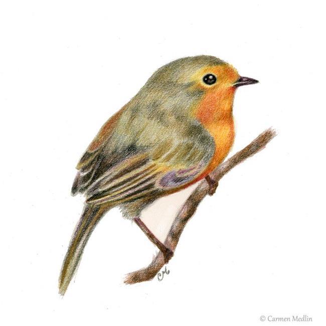 Art: European Robin by Artist Carmen Medlin