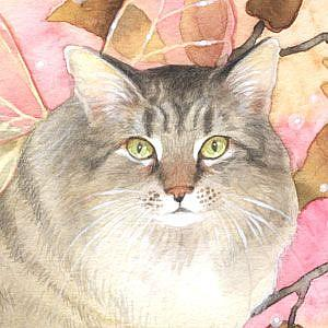 Detail Image for art Maine Coon Magic