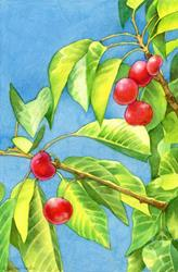 Art: Cherry Tree by Artist Carmen Medlin