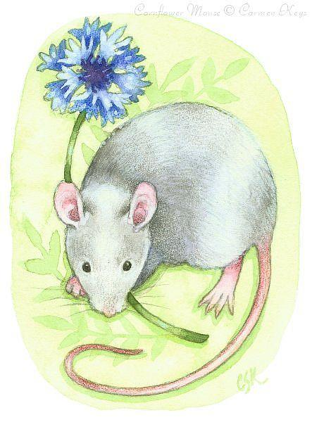 Art: Cornflower Mouse ACEO by Artist Carmen Medlin