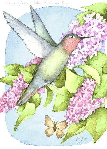 Art: Hummingbird and Lilacs ACEO by Artist Carmen Medlin