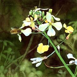 Art: Bee and Wild Mustard  by Artist Carmen Medlin