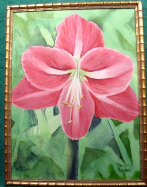 Art: My Red & White Amaryllis //?SOLD by Artist Barbara Haviland